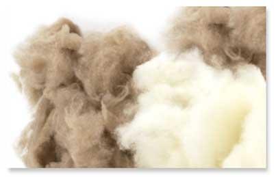 Image result for cashmere fiber